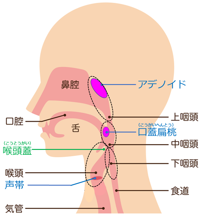 扁桃 腺 どこ